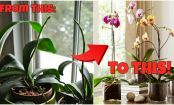 How To Make An Orchid Bloom Again