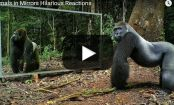 VIDEO: Watch what happens when WILD ANIMALS see themselves in the MIRROR for the FIRST TIME