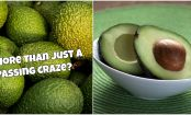 6 Avocado Facts That Will Blow Your Mind