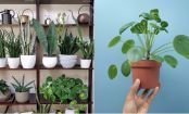 7 Fascinating Reasons To Have Plants In Your Home And Office