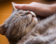 These are the 9 Most Loving Cat Breeds