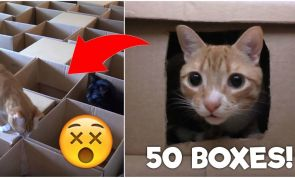 This Guy Created the Ultimate Maze for His Cats...with 50 Boxes!