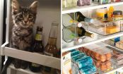 10 foods you should NEVER store in the refrigerator