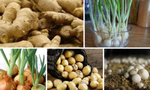 Here are 10 fruits and vegetables you can easily grow at home!