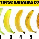 9 Surprising Health Benefits of Bananas