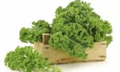 What's the Deal with KALE?