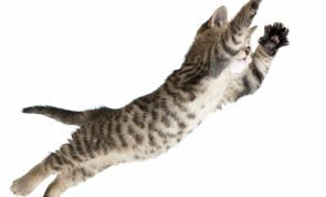 Cats ALWAYS Seem To Land On Their Feet: But How?