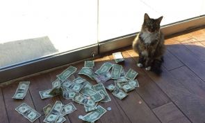 The Cashnip Kitty: This Cat Takes Dollar Bills From People To Give To The Homeless