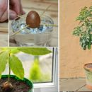 Stop Buying AVOCADOS and Start Growing Them at Home: Here's How!
