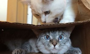 Ever Wondered Why Your Cat Loves BOXES So Much? Here's Why