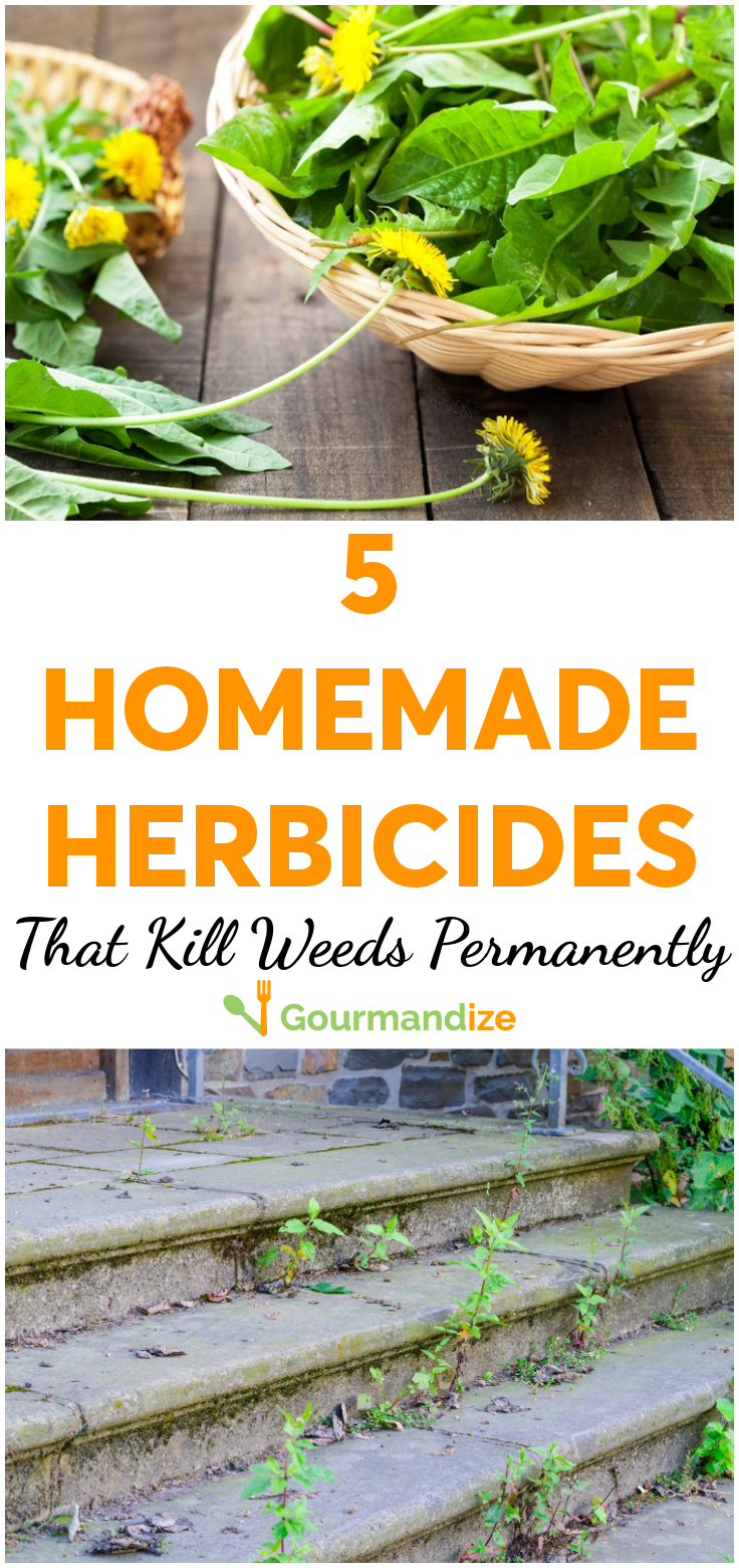 5 Homemade Herbicides That Kill Weeds Naturally