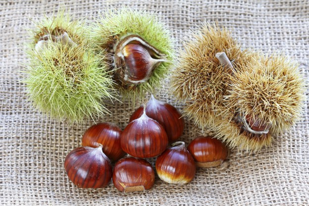 Chestnuts And Dieting